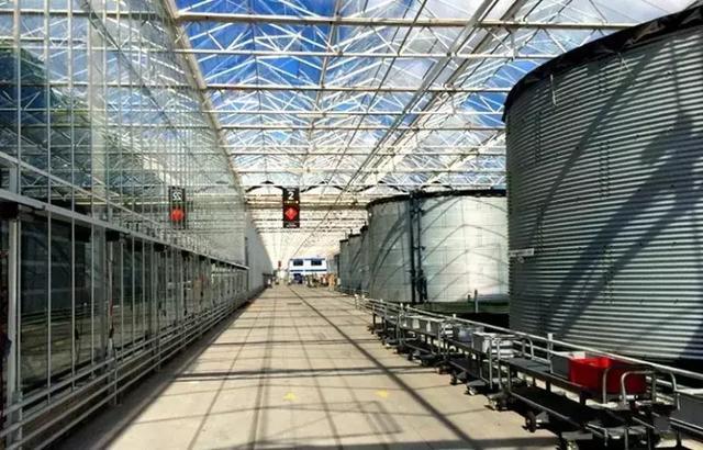 大型连栋温室不适合中国,日光温室是主要发展方向?