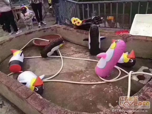 广西现奇葩动物园 画风有点奇怪