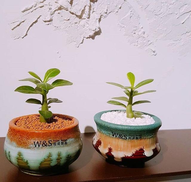 2种花卉,好养殖,平时一个月不浇水也能够正常的生长,开花漂亮