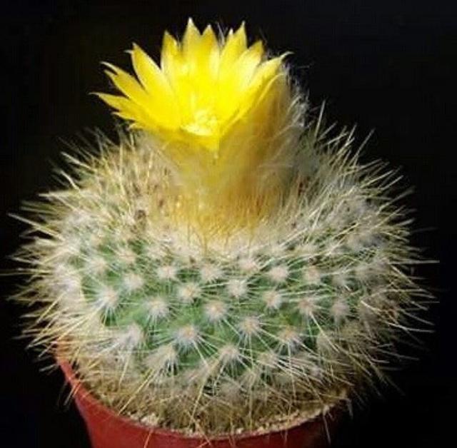 三类花卉,即使是不花钱也不要在家中进行养殖,会给生活带来不便