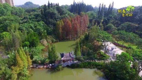 金山植物公园:初冬池杉似油画_阳江视听网