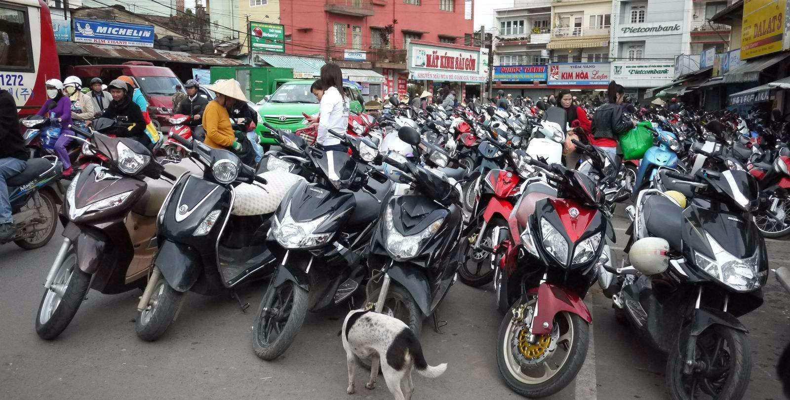 TPP生效让越南的畜牧业成为受伤最严重的行业,畜牧业急需变革