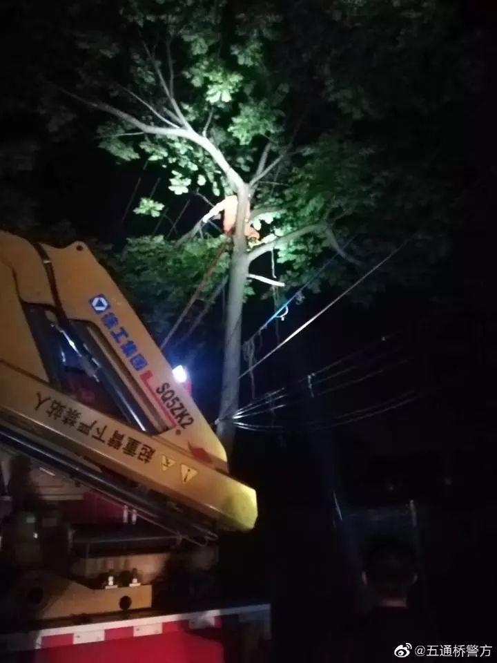 五通桥一秃鹫受伤,起重机来营救……