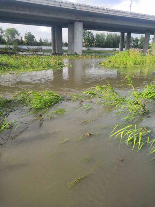 一场大雨过后,青岛李村河下游人潮汹涌,这次捞的不是服装鞋帽