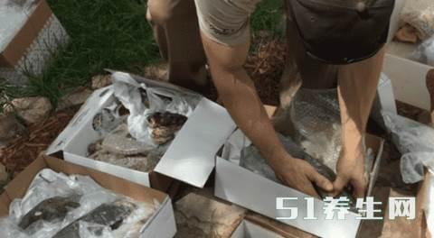 小伙发现大量石块,看清楚后,赶紧用胶袋装起来_图3