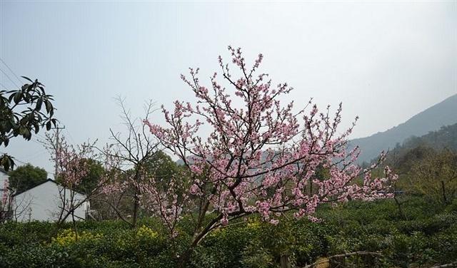 苏州不仅园林有名,这4个景点也不错,而且还是免费的