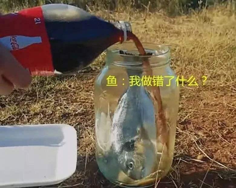 震惊!将鱼放入可乐和雪碧中浸泡密封30天,鱼没了