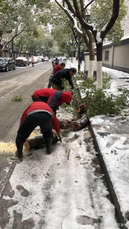 园林部门积极应对大雪天气