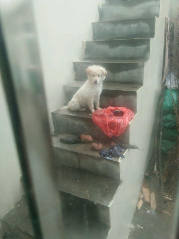 女孩帮流浪狗遮一下雨伞,小家伙就跟随她到家,眼神让人无法拒绝