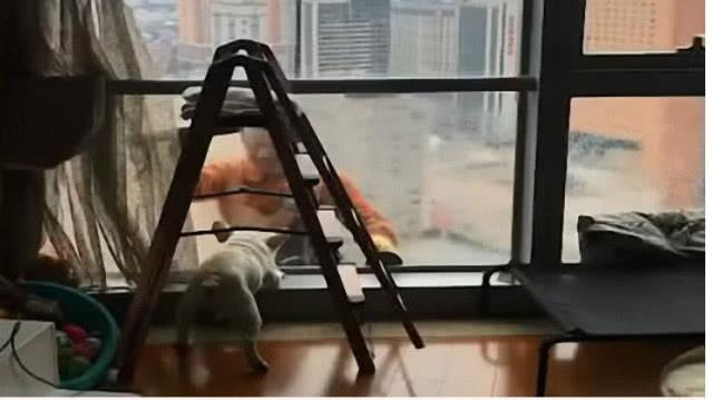 清洁大哥在高楼擦玻璃,家中狗狗上前互动,把大哥都笑开了花