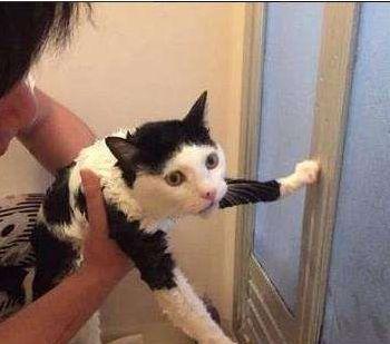猫主子为啥放着准备好的水不喝,自己跑去打开水龙头喝水呢?