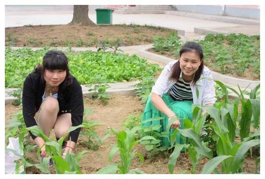 农民种玉米施追肥,是施尿素?还是施复合肥?学习一下有好处