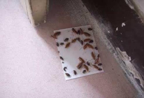 夏天蟑螂多?20年家政:自制驱虫水,比啥都管用,蟑螂不进门