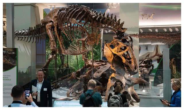 美国家自然历史博物馆化石展厅举行媒体预览,罕见霸王龙骨架亮相