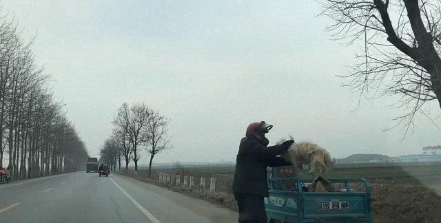 面对偷偷追出来的狗,主人一把抓住狗头就扔到三轮车里,太逗了