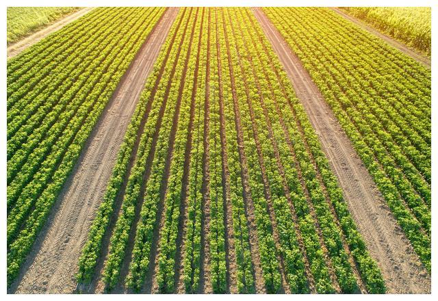 2019水稻、玉米、大豆补贴是这样的
