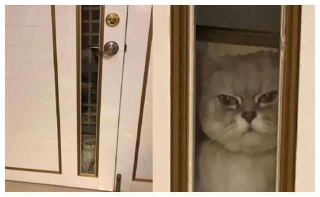 隔纱窗摸完小三喵!转头见爱猫臭脸站门缝:竟敢偷客兄