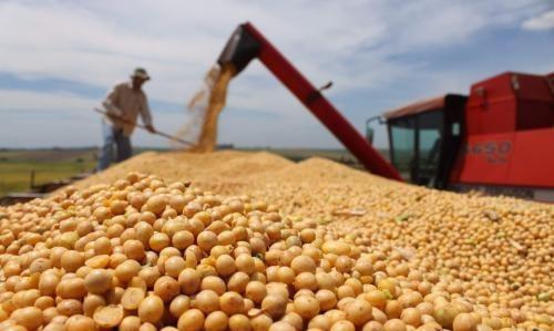 夏季大豆怎么样种植才能增产呢?这几个关键点要注意!