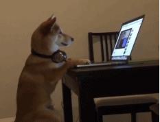 连狗子都开始沉迷游戏了?放下手必赢bwin脑你还是条好狗!