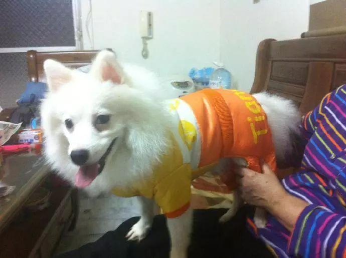 怕出门冻着,奶奶给狗狗穿了6层衣服...