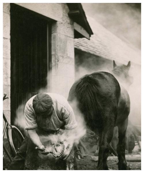 """黑龙江古墓中出土""""怪物"""",经过多方面努力,畜牧专家给出答案"""