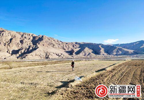 新疆阿合奇县人工育草优化牧业生态