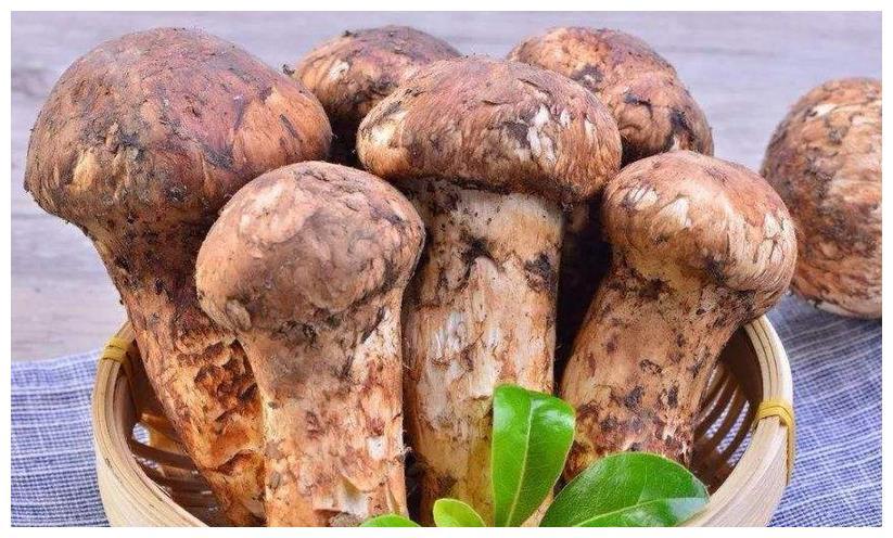 农村一种食用菌,价格昂贵但味道鲜美,现在市价一斤600元