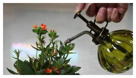 1个空油桶,一勺黄豆粒,暴晒1个月浇花就爆盆,比复合肥效果好