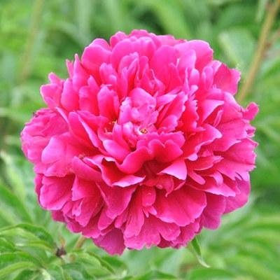 提醒大家:不管房子多大,摆上6种花卉,春节满屋花香