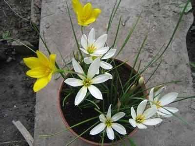 越冷越要养这3种花卉,不怕冷,种下去能活10年,一长一大盆!!