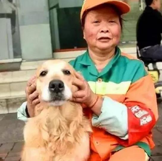 狗狗流浪被清洁工收养,狗狗为帮助主人,天天去捡废品换钱