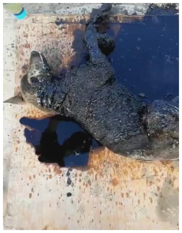 狗狗身上沾满沥青,小哥拿柴油机智解救,让狗重获新生