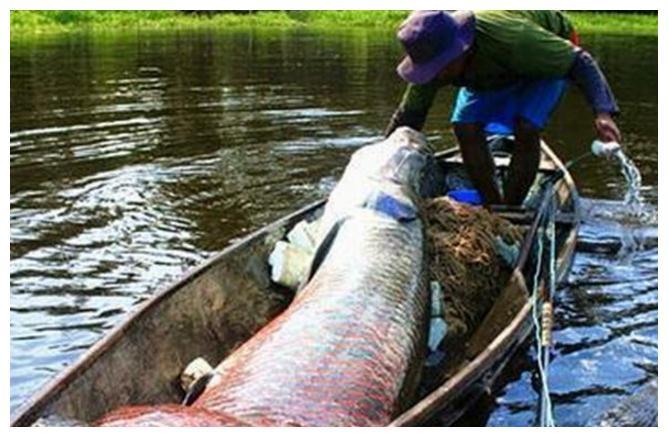 小伙湖边捕鱼,差点成了鱼饲料,捕上岸仔细一看,惊出一身冷汗