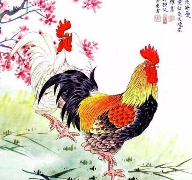 春江水暖鸭先知:苦命鸡,亥猪年有一坎难过去