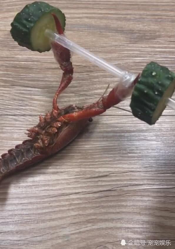 龙虾举着健身器材,锻炼身体,网友:死了还不放过!