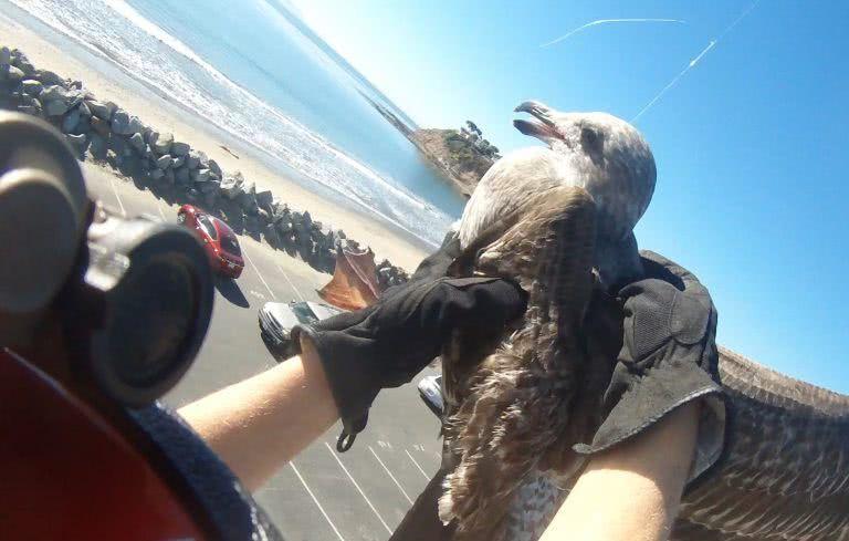 海鸥在路灯下悬空转圈圈,好像要寻短见,路人仔细一看赶紧喊救命