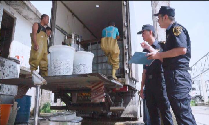 上半年江门海关助力我市水产品出口货值超2亿美元