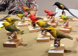 艺术家用木制品复刻夏威夷濒危鸟类