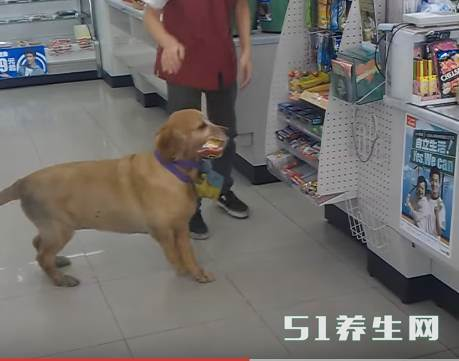 金毛进店就是一阵吼,看到它脖子的胶袋后店员秒懂_图3