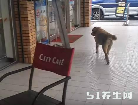 金毛进店就是一阵吼,看到它脖子的胶袋后店员秒懂_图1
