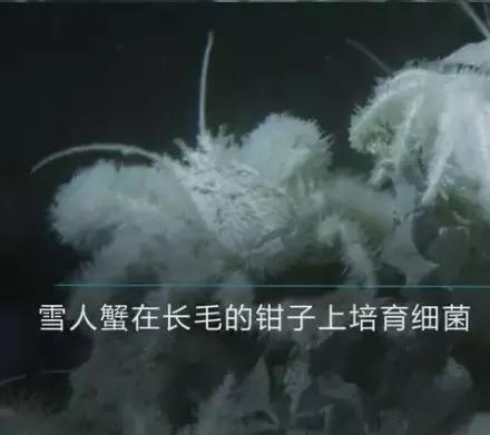 蓝天豚深海明珠水性硅藻365bet怎么提现_365bet官网平台网址_365bet最新备用,以深海级净化,给家深海级纯净体验