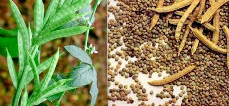 12种常见的食品添加剂 - 你应该避免使用它们吗?