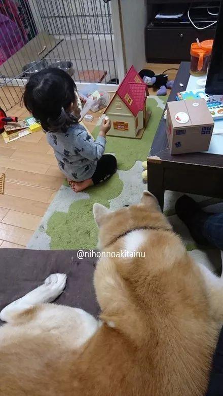 小女孩吃着零食,狗狗趴在地上看着,这眼神笑喷了