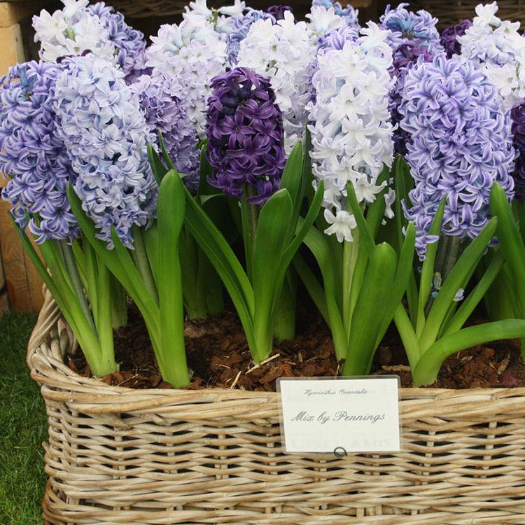 建议大家:工资允许,5种花卉必须养,花开清新满屋子都飘香