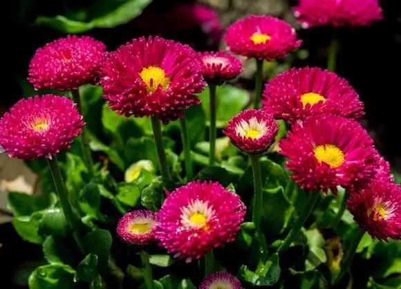如何控制花卉植物的花期?让你在任何时间都能赏花呢?