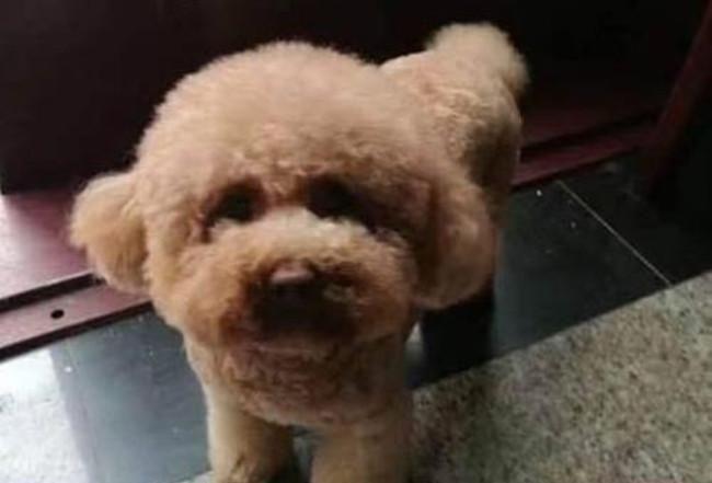  理发店门口偶遇一只狗狗,走近一看:这是吃猪饲料长大的吗