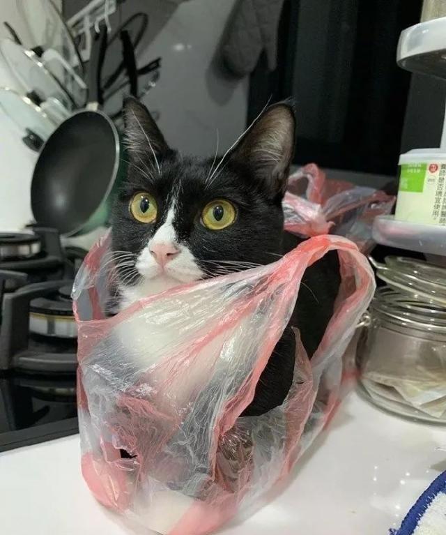 主人忘记把塑胶袋扔掉,过会回来,里面躲着一只猫!