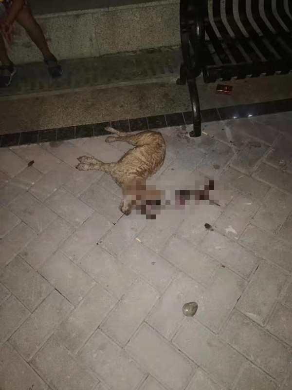 又是高空抛物!天降鹅卵石,她养了10年的爱犬被一击毙命
