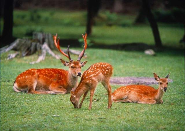 """为何甗王上bet36官网靠谱吗_bet36官网_bet36官网亚洲版两只青铜鹿,专家说:它们可帮人找到一种""""食品"""""""