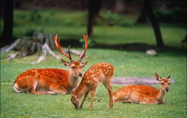 为何甗王上bet36官网靠谱吗_bet36官网_bet36官网亚洲版两只青铜鹿
